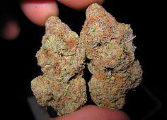 cannabis samen kaufen Chernobyl