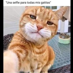 Selfie with cat - your daily dose of funny cats - cute kittens - pet memes - pets in clothes - kitty breeds - sweet animal pictures - perfect photos for cat moms Cute Funny Animals, Cute Baby Animals, Animals And Pets, Funny Cats, Wild Animals, Pretty Cats, Beautiful Cats, Cute Cats And Kittens, Kittens Cutest