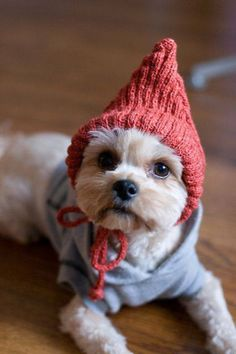 Dog wearing sweater and hat