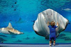 Stai Sereno: Un pesce nell'acquario vede noi come noi vediamo l...