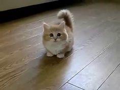 El Gato Mas Tierno Del Mundo ♥ Los Mejores videos de gatos ...