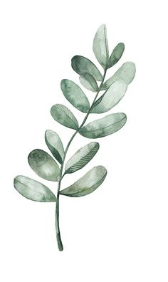 Watercolor Leaf for HerbaLine on Behance