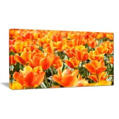 "DesignArt Fresh Tulip Flowers on Sunny Day Floral Photographic Print on Wrapped Canvas Size: 20"" H x 40"" W x 1"" D"