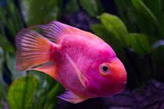 FISH - Recherche Google