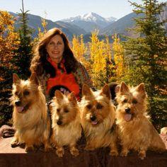 Arista Australian Terriers Australian Terrier Puppies, Norfolk Terrier Puppies, Terrier Rescue, Terriers, America, Dogs, Animals, Animales, Animaux