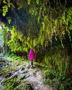 salts daigua cabrera danoia Travel Around The World, Around The Worlds, Places To Travel, Places To Go, Paludarium, Beautiful Places To Visit, Van Life, Tourism, Country Roads