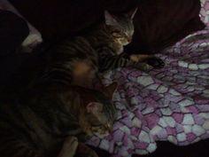 Los gatos de una amiga :-)