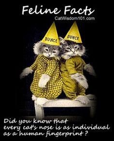 Vet 101 Felines Facts. The nose. Cat Wisdom 101 Cat Wisdom 101 - Welcome To enlighten & entertain cat lovers everywhere