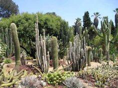 cactus shop - Buscar con Google
