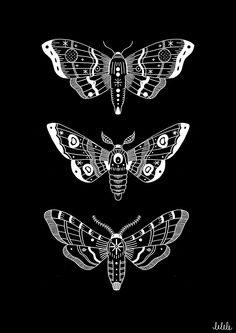 Astral moths - ink on paper, 2014, Maddy Young