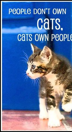 People don't own cats, cats own people.