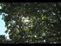 ▶ Abraham Hicks Rampage of Invincibility...GOOSEBUMPS! - YouTube