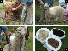 Preparing Wool for Yarn - Part 1: Shearing, Picking and Washing Wool Tutorial on Build an Ark at http://www.buildanark.net/index.php?pages/Preparing%20Wool%20for%20Yarn%20-%20Part%201.html