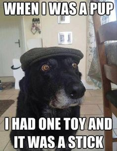 When I was a pup - funny dog meme | Funny Dirty Adult Jokes, Memes ...