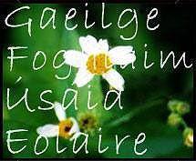 Gaelic Words and Phrases Gaelic Words, Irish Language, Irish Culture, World Cultures, Summer 2015, Ireland, Dress, Dresses, Vestidos