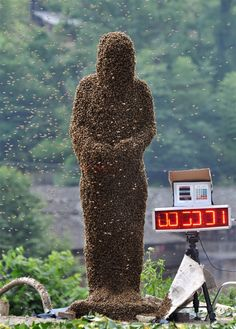 Bees cover beekeeper Lu Kongjiang as he stands on a set of weighing scales during a 'bee bearding' contest on July 16, in Shaoyang, Hunan Province of China. Wang Dalin won the contest after attracting 26.86kg of bees onto his body, covered only by a pair of shorts and swimming goggles.