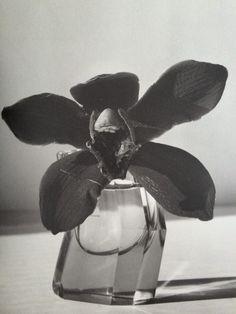 Nobuyoshi Araki - Les femmes, les fleurs, le bondage et le quotidien Asian Photography, Still Life Photography, Japanese Photography, Jewelry Photography, Roman Photo, Polaroid, Foto Art, Still Life Art, Black And White Portraits
