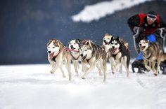 Wintersport auf 4 Pfoten..... by Anne Geier on 500px