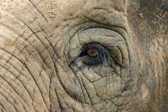 olifantenhuid - Google zoeken