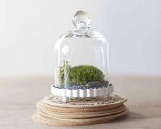 Inspiration miniature cloche terrarium by hammersheels on Etsy, $19.99