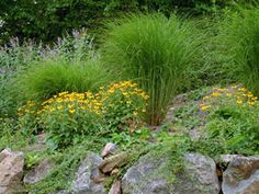 Ornamental grass and Black eyed Susan. See some of the best ornamental grasses here. http://www.landscape-design-advice.com/ornamental-grass.html