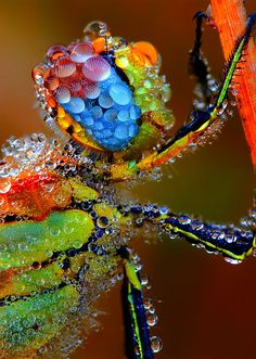 "Dragonfly covered in dew. ""How do I turn on the windshield wipers?"""