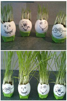 Des oeufs, de l'herbe a chat, de la patience et voilà de jolies décorations de Pâques a faire avec les enfants