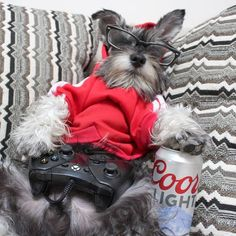 Maybe you've just adopted a Schnauzer into your family and don't know what to call them yet. If you're looking for the best name for a Schnauzer dog, you've come to the right place! Here are 30 of the best sweet names for Schnauzer dogs! Schnauzers, Mini Schnauzer Puppies, Cute Puppies, Cute Dogs, Dogs And Puppies, Dolly Parton, Dog Clippers, Most Popular Dog Breeds, Dog Names