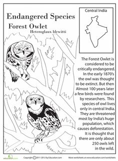 Endangered Species Worksheets from Education.Com (Shown: Forest Owlet) Endangered Animals Lessons, Owl Life, Animal Activities For Kids, Writing Lesson Plans, Animal Adaptations, Most Beautiful Animals, Earth Day Crafts, Animal Facts, Wonderful Picture
