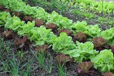 4 Winter Planning Tips for a Bountiful Garden Year Raised Garden, Diy Garden, Replant, Summer Vegetables Garden, Plants, Garden, Farm, Perennial Herbs, Farm Gardens