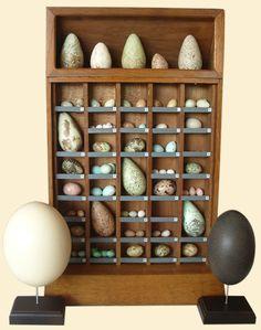 Hobbies Bird's Egg Collection. France.