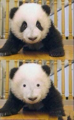 When you see your friend without glasses for the first time | #lol #funny #humor