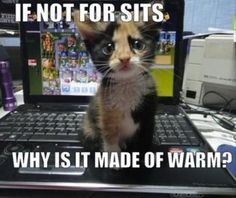 why is it made of warm?...