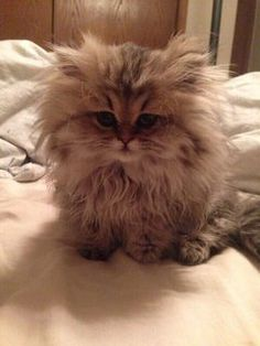 Waking up from a nap like...