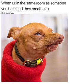 Dog Memes That Will Keep You Laughing For Hours - 22