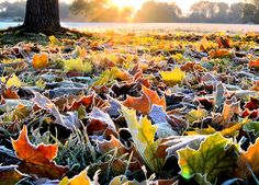 """""""But frost, like the crystallized dreams of autumn, began to coat the clearing with its sugar glaze."""" ― Victoria Steele Logue, Redemption"""