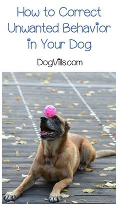 Did you ever teach your dog something you would now like to get them to stop doing? Check out our dog training tips to correct unwanted behavior! // KaufmannsPuppyTraining.com // Kaufmann's Puppy Training // dog training // dog love // puppy love //