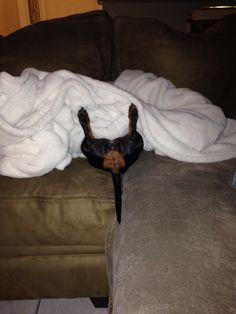 Sorry! Bad view! #dachshund