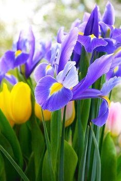 Springtime for sure...