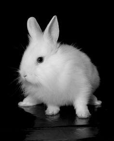 White_Rabbit_I_by_neodecay.jpg (805×993)