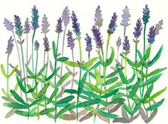 Lavender Flowers Watercolor Original Painting by countrygarden on Etsy