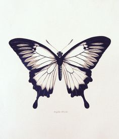 ▷ 40 + Ideen und tolle Bilder zum Thema Schmetterling Tattoo now we are showing you one of our favorite ideas for a black flying butterfly with big black eyes Vintage Butterfly Tattoo, Black Butterfly Tattoo, Butterfly Mandala, Butterfly Drawing, Butterfly Tattoo Designs, Tattoo Black, Tattoo Vintage, Butterfly Shape, Blue Butterfly