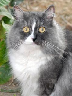 FreebieCat's Cat of The Day September 29, 2015  http://www.freebiecat.com/cat-of-the-day.php