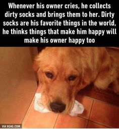 Awwwwwww this is the nicest dog