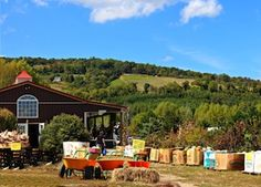 Fall Pumpkin Harvest Festival at Great Country Farms #Fallfestival #pumpkins #dc #md #va