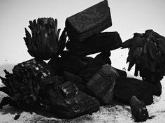 Natura Morta | Studio Toogood