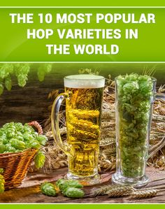 There are many places that make Buying Hop Rhizomes easy, you just need to be aware of when they become available and ensure you are ready for it! Make Your Own Wine, How To Make Beer, All Beer, Best Beer, Hop Rhizomes, Hops Trellis, Beer Hops, Coffee Snobs, Root Beer