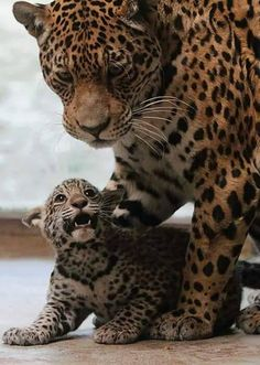 Hey don't worry Mom! I'll be fine!