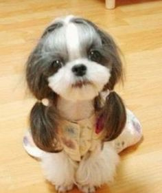OMG!!!!!!! Love this little dog!