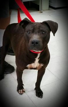 please share no updates - can you adopt or foster with rescue? - Friends of Baldwin Animal Control in Milledgeville, GA Page Liked · May 14 · Edited · **On the euthanasia list for 10am Monday May 18th** ANNABETH has $250 in pledges! She only weighs 38 pounds and is barely over a year old! This girl has the funniest little bark you've ever heard and her whole body wiggles when she meets new people! She came in with her puppy (that was adopted a while back) Annabeth walks well on a leash and…